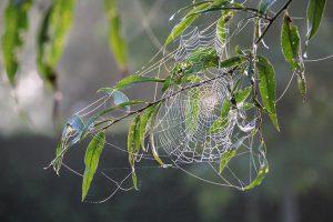 Spinnenweb-tuin-tuinblogger-herfst