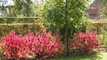 Zeker weten: de herfst is het beste plantseizoen!