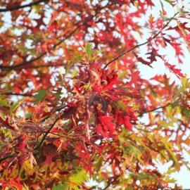 Herfst-tuin-boom