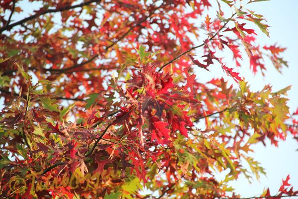 Herfst: mijn favoriete jaargetijde!