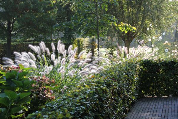 7 soorten haagplanten op een rij