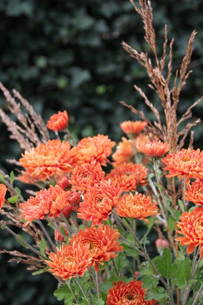 Chrysanten-bos-bloemen-kweken-idee-tuin-tuinblog