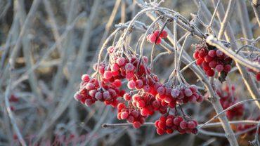 Warme kerstgroet van Esther
