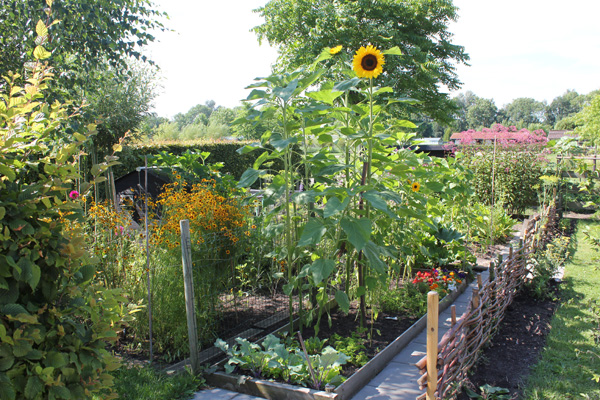 moestuin-tuinblog-mooi