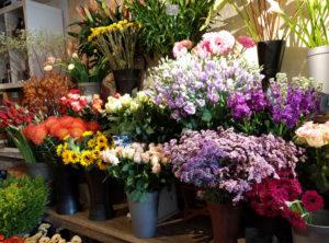 bloemen-pluktuin-tuinblog