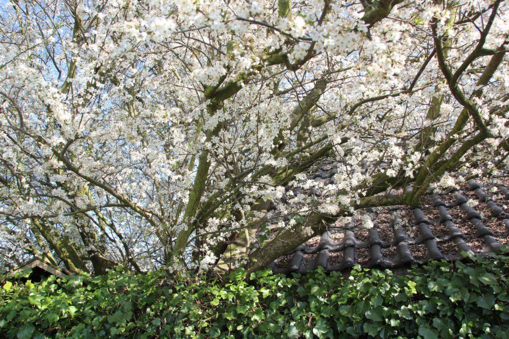 bloesem-schuurtjes-tuinblogger