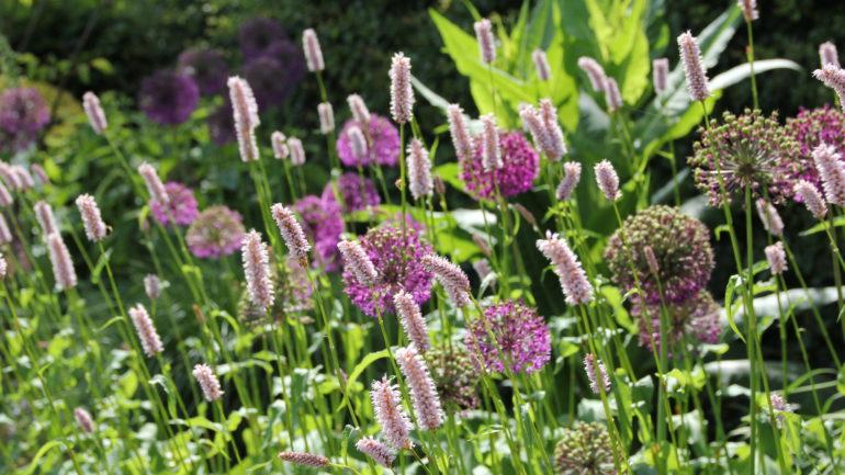 Sieruien voor een mooi paars accent in je tuin