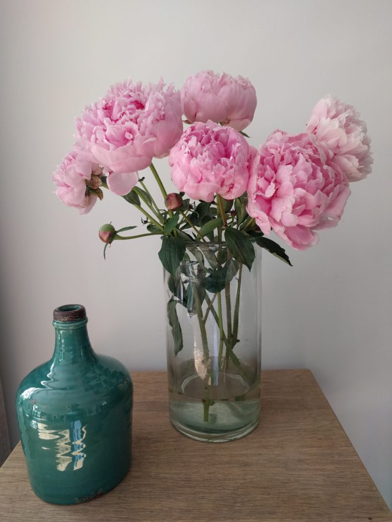 pioenroos-tuinblogger-roze-vaas-kweken