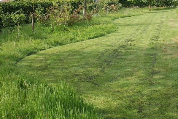 Gras In Tuin : Timmerwerk in de tuin gras en groen hoveniers