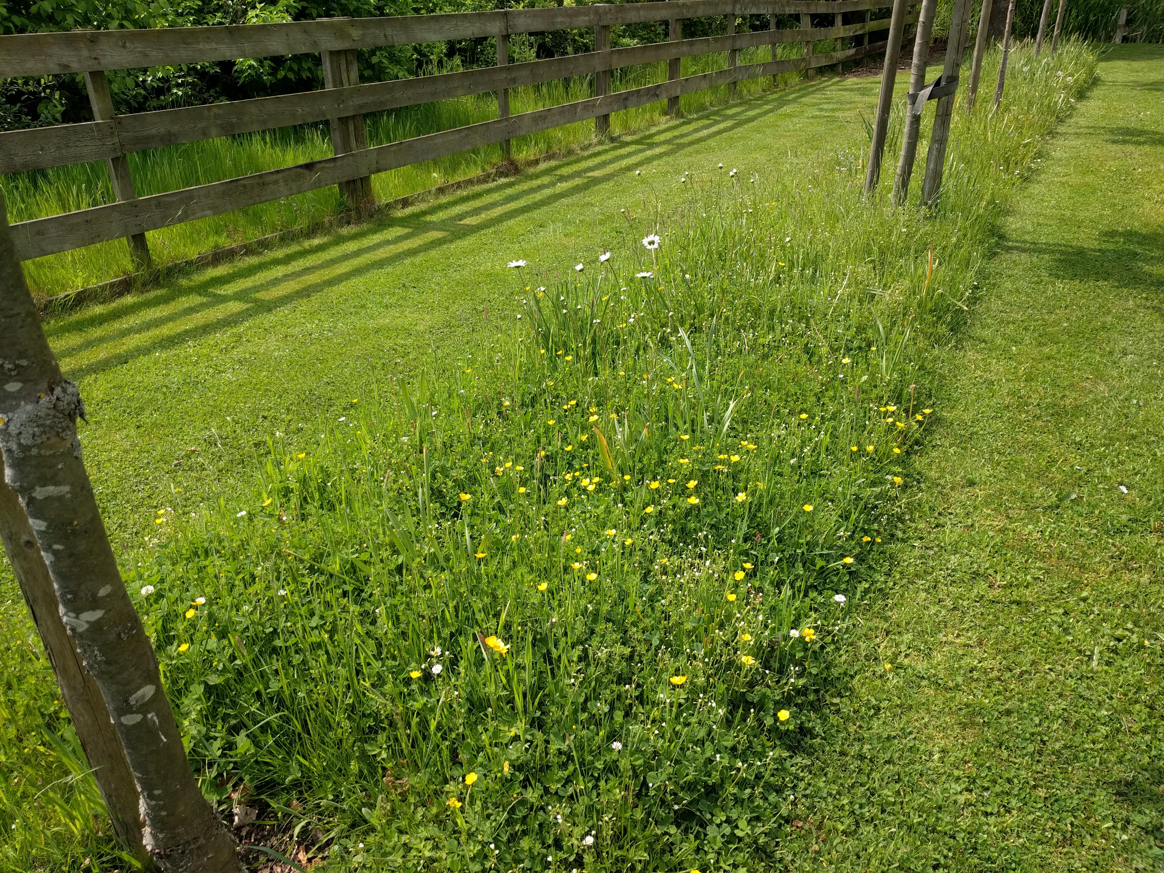 Gras In Tuin : Bladeren zijn slecht voor je grasmat verwijder ze op tijd