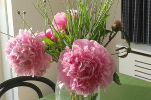 3-pioenroos-tuinblogger-roze- vaas