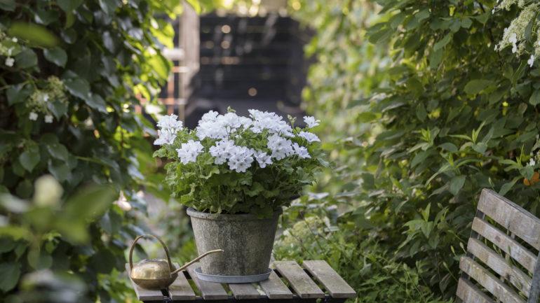 Zomerse gezelligheid op je tuinterras