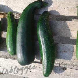 Courgette-oogst-moestuin-tuinblogger-zoet-zuur-recept-inmaken