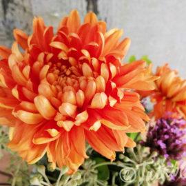 chrysant-oranje-tuinblogger-eigen-kweek
