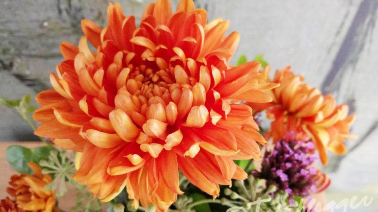Meer lezen over chrysanten kweken: 3 blogs op een rij
