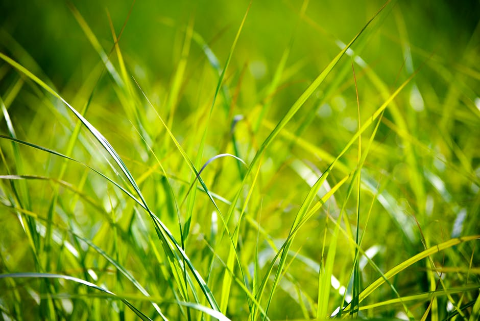 grass-field-the-background-the-sun
