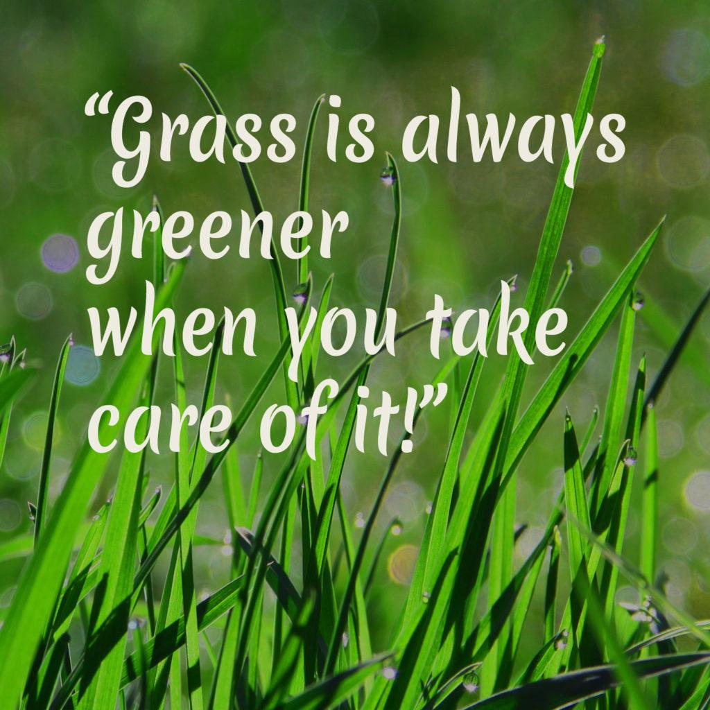 quote-gras-greener-tuinblogger