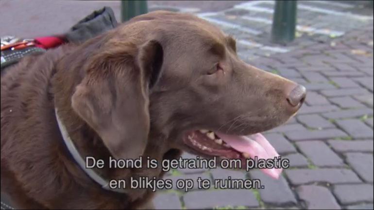Ruimt jouw hond al plastic op?