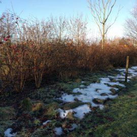 hek-plek-sneeuw-winter-tuinblog