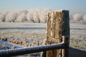 december-tuintips-tuinblogger