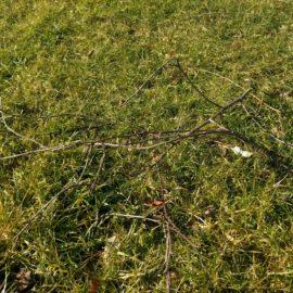 gazontips-gras-na-winter-tuinblogger