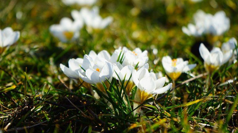 Geef je gazon een opbeurende lente-kuur!