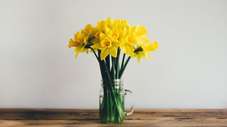 Narcissen: simpel, mooi en makkelijk!