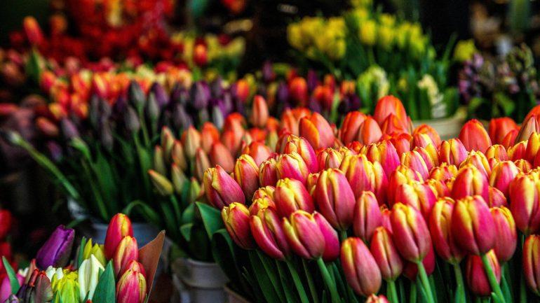 Tulpen: hoe meer kleur hoe beter!