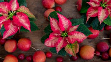 Kerstster ook in herfst mooi