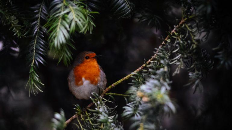 5 tips voor de Tuinvogeltelling