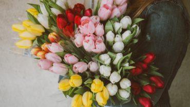 Tulpen lang mooi houden !