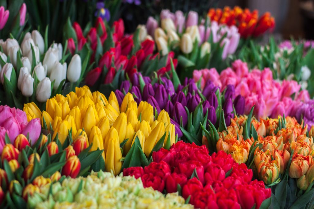 tulpen-kleuren-bossen