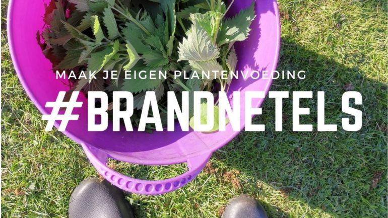 Zo maak je zelf plantenvoeding