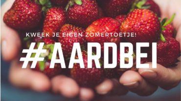 Aardbeien: kweek je eigen zomertoetje!