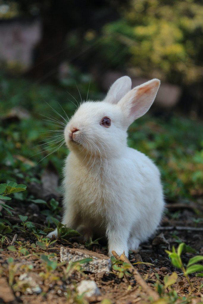 Wit konijntje in het gras.