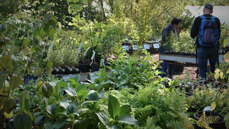 Ontdekkingsdagen bij kwekerij Lowgardens Nurseries