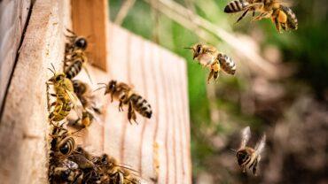 Wil jij weten hoe het écht met de bijen gaat?
